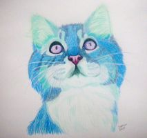 Crazy Cat by Sayla-Moon