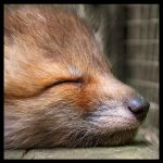 Sleep by Skia