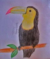 Toucan - 18-10-11 by DrunkenCucumber