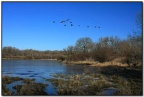 Where Wild Geese Fly by LoneWolfPhotography