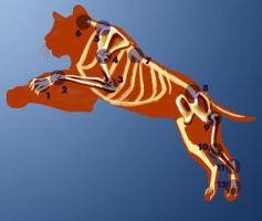 Jumping Tiger - Pivot Points by m-gomes