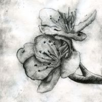 Spring Flower - Etching by Nick356