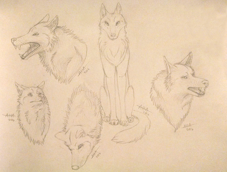 Sketch Dump WOLVES by Aoi-Haruko-Ayame