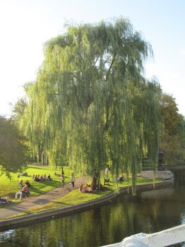 weeping willow by EternalLoveAngle