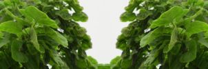 Organic Symmetry 10 by meathive