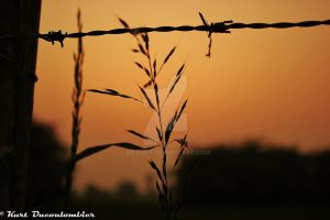 Barbed wire sunset by Riddseh