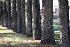 Trees by EMGrapes