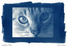 Cyanotype: Baby by twistedtechnolog