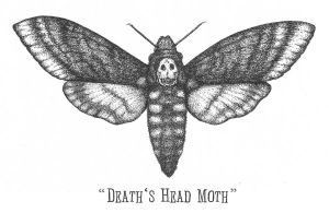 The Death's Head Moth by faustdavenport