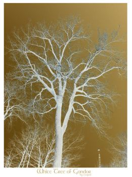 White Tree of Gondor by cooper