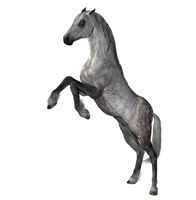 STOCK PNG horse dapple grey4 by MaureenOlder