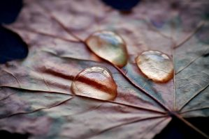 follow my tears II by JoannaRzeznikowska