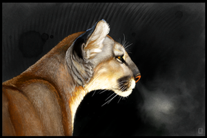 Cougar Intensity by ArtofJefferyHebert