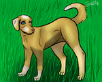 Dog~ by Kulia-Shadow-Stalker