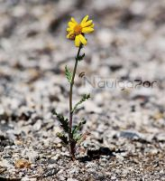 lone flower by NaViGa7or