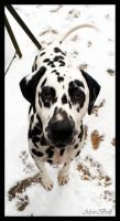 Little Spotty Doggy by Alex-Brill