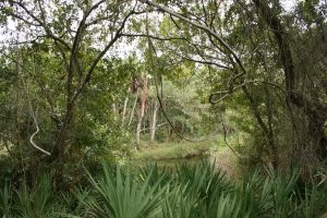 Florida Greenery 3 and river by elf-fu-stock