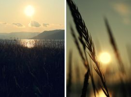Summer evenings 2 by KamillaHansen