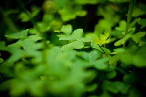 On a Bed of Clovers by alvse