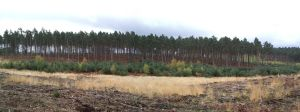 Swinley Forest 3 by asm495