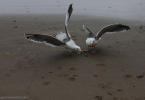 Sea Gulls 1 by worldtravel04