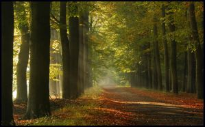 Lightthought 492 by lightthinker