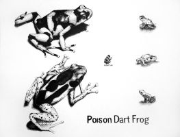 Poison Dart Frog by spiralkitty