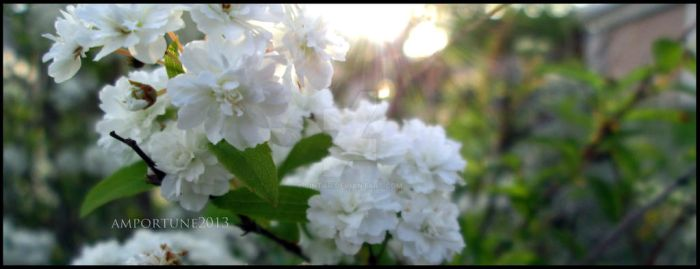 White Flowers by sintar
