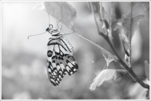 New butterfly. by OshimaruKung7285