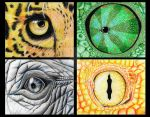 animal eyes by Mimn