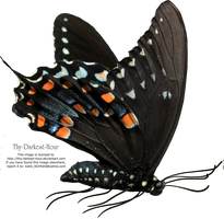 Butterfly PNG by Thy-Darkest-Hour