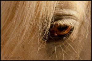 Close Up - Icelandic Horse by Leeuwtje