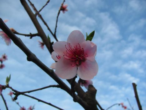 Blossom and sky by TARDIS-time-turner