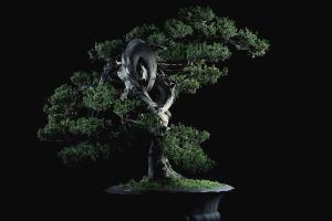A Loopy Bonsai by drifterManifesto