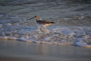 wading at sunset by dreamsnthewind