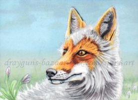 Red Fox White ACEO by De-Vagrant