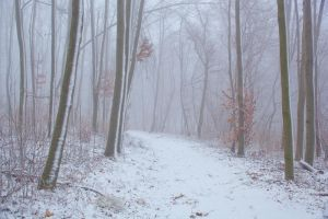 Winter scene III by szorny-stock
