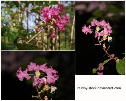 Pink Flower-STOCK-Pack-1358 by Rainny-Stock