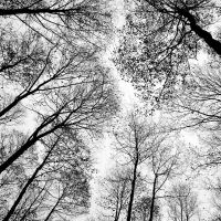 look up by wojtar