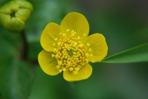 Yellow flower II by nilchil