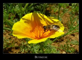 Bee by lasaucisse