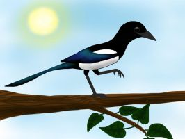 Magpie by a-moment-at-midnight