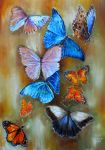 Morphos (and other tropical butterflies) by veracauwenberghs