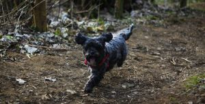My doggy running by Samuel-Benjamin