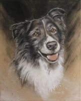 Border Collie 'Cayenne' by ownlifeworks