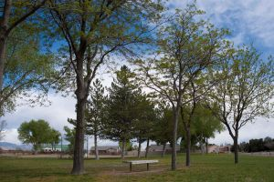 Trees in a park. by Cadha13