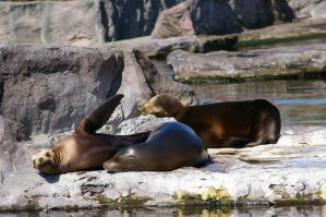 Seals II by expression-stock
