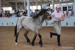 Roan Pony Stock 3 by lee-mare