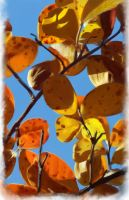 Crape Myrtle by Joava