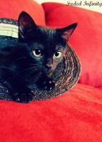 Cat in a Hat by Poetic-justice88